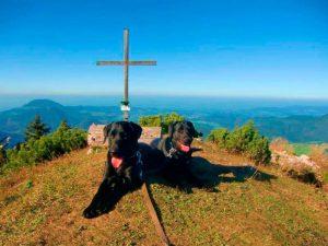 Labrador Retriever am Berg vor dem Gipfelkreuz