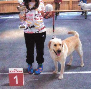 Labrador Retriever und Mädchen mit Pokal in der Hand